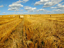Straw bales on farmland. Straw bales on farmland with blue cloudy sky Stock Photography