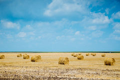 Straw bales on farmland Stock Image