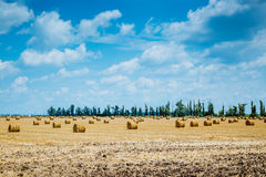 Straw bales on farmland Stock Images