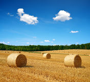 Straw bales on farmland Stock Images