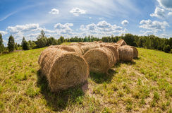 Straw bales on farmland with blue sky Royalty Free Stock Images