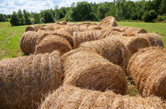 Straw bales on farmland in summer day Stock Photos
