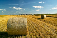 Straw bales on the field. Cylinders of rolled straw bales on the field righ after harvest time Stock Photography
