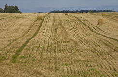 Straw bales in a field Royalty Free Stock Images