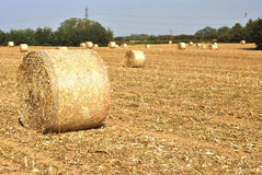 Straw bales in a field Stock Photography