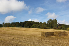 Straw bales on field Stock Photos