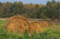 Straw Bales in the Field Royalty Free Stock Image