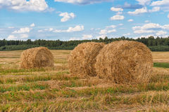 Straw bales. Straw bales in the field Stock Image
