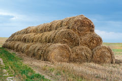 Straw bales. Straw bales in the field Royalty Free Stock Image