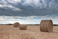 Straw bales in a field. Some packed roll of straw in a field Stock Images