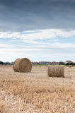 Straw bales in a field. Some packed roll of straw in a field Royalty Free Stock Images