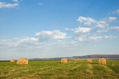 Straw Bales in field. Image of straw or hay bales in a field Royalty Free Stock Image