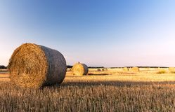 Straw bales in a field with blue sky, summer morning Royalty Free Stock Photography