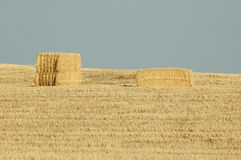 Straw bales. In a field of grain dry Stock Photos
