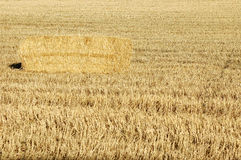 Straw bales. In a field of grain dry Royalty Free Stock Photo