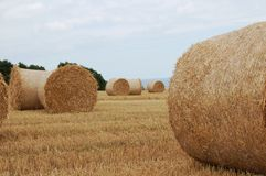 Straw bales in a field. Royalty Free Stock Image