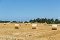 Straw bales in a field Royalty Free Stock Photo