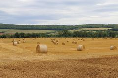 Straw bales in the field stock images