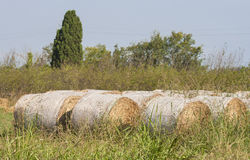 Straw bales on the field Stock Image