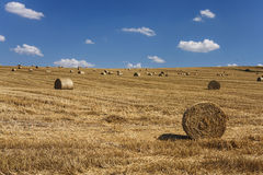 Straw bales on field. In summer Royalty Free Stock Images