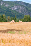 Straw bales on field at summer Royalty Free Stock Photo