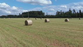 Straw bales on the field stock video footage