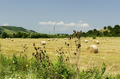 Straw bales in a field during the summer harvest. And power poles royalty free stock image