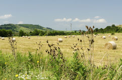 Straw bales in a field during the summer harvest and a stork. Straw bales in a field during the summer harvest Stock Image