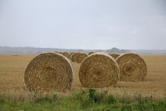 Straw bales on a field in Sweden a rainy autumn day. Stock Photography