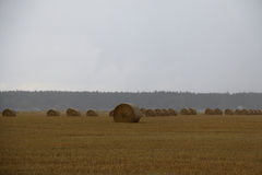 Straw bales on a field in Sweden a rainy autumn day. Royalty Free Stock Photos