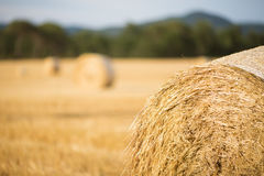 Straw bales field Royalty Free Stock Photo