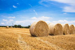 Straw bales field Stock Images