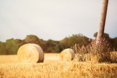 Straw bales field Royalty Free Stock Image
