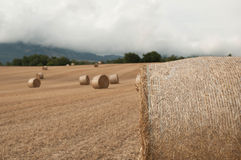 Straw bales in the fields. Farmland Stock Image
