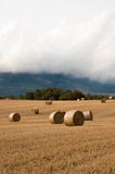 Straw bales in the fields. Farmland Royalty Free Stock Photos