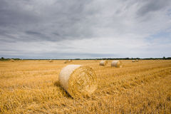 Straw bales at filed Royalty Free Stock Images