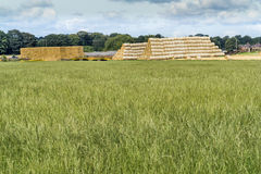 Straw Bales gathered in after harvest time on the farm Royalty Free Stock Images