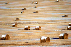 Straw bales at harvest Royalty Free Stock Photography