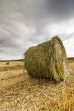 Straw bales after harvest Stock Image