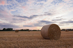 Straw bales after harvest at sunset time Stock Photo