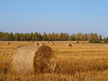 Straw bales on harvested cereal field, autumn agriculture backgr Stock Images