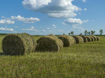 Straw bales in harvested field and blue sky with clouds. Royalty Free Stock Photo