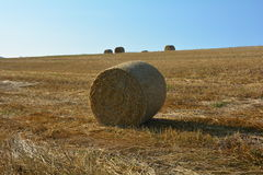 Straw bales on harvested field with  many hay bales  in horizon Royalty Free Stock Images