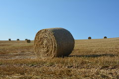 Straw bales on harvested field with  many hay bales  in horizon. And blue sky Royalty Free Stock Images