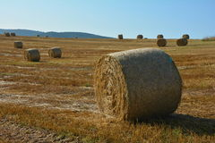 A Straw bales on harvested field with  many hay bales  in horizon. Straw bales on harvested field with  many hay bales  in horizon  and blue sky Stock Photography