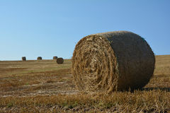 Straw bales on harvested field with many hay bales  in horizont Stock Images