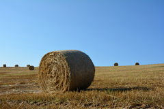 Straw bales on harvested field with many hay bales in horizont. Straw bales on harvested field with many hay bales in horizon and blue sky royalty free stock photo