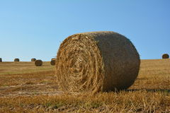 Straw bales on harvested field with many hay bales in horizont. Straw bales on harvested field with many hay bales in horizon and blue sky royalty free stock images