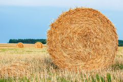 Straw Bales. Harvested straw bales in a sunny day Stock Image