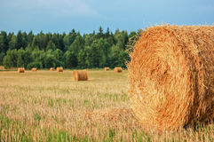 Straw Bales. Harvested straw bales in a sunny day Stock Photos